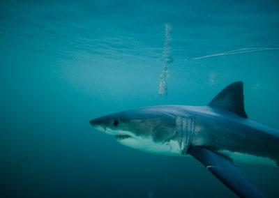 WSP Underwater (2)