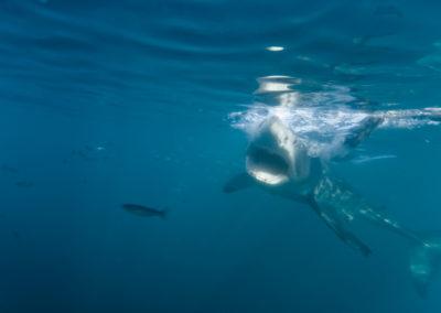WSP Underwater (3)
