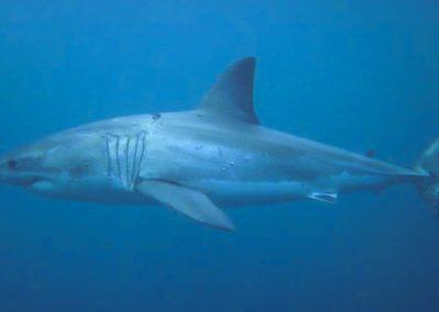 WSP Underwater (5)