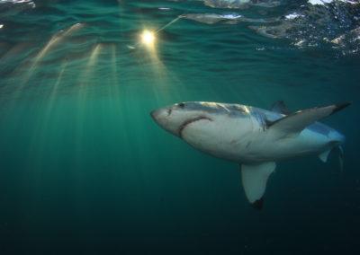 WSP Underwater (6)