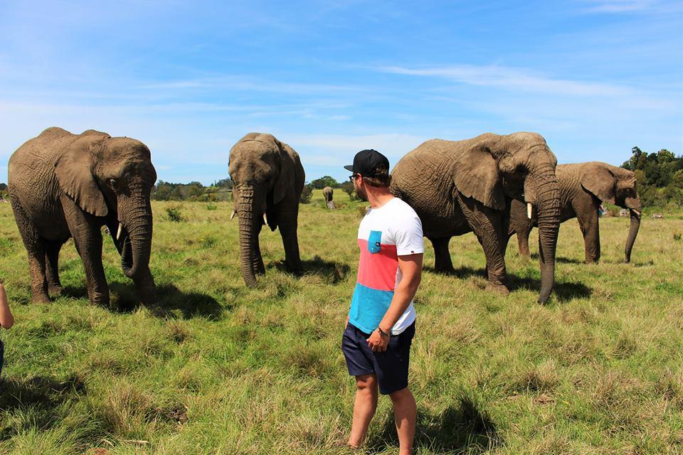 Visit Elephant sanctuary on Garden route tour south africa