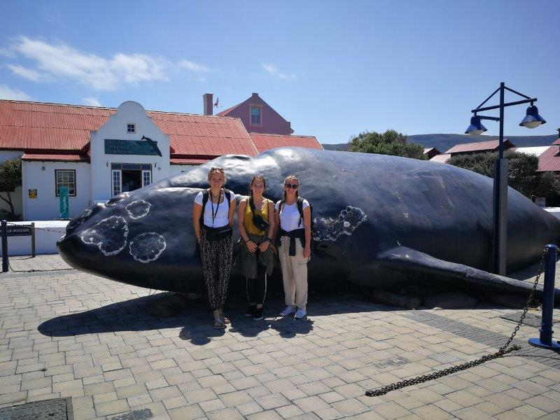 Whale watching Cape Town South Africa