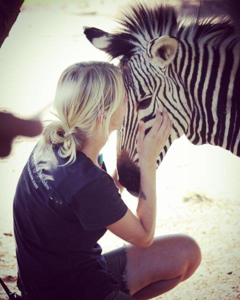 Volunteer with Zebra at the Widlife Rescue Station program in Namibia